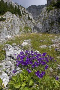 drumetii-alpine-13