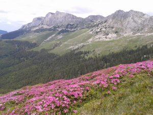 drumetii-alpine-25